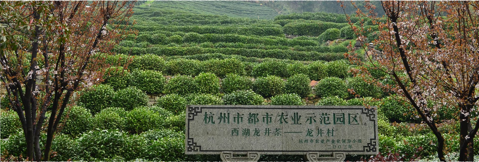 Longjing Village Tea Garden